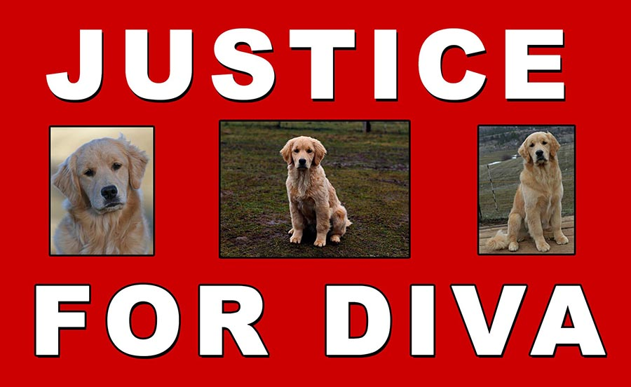 justice for diva