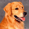 sherwood goldens trac home page