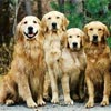 sherwood goldens history